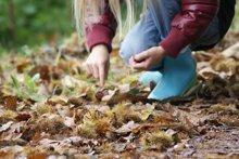 Marroni sammeln mit Kindern im Herbst