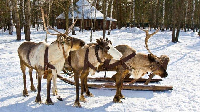 Rätseln im Eislabyrinth - Bringst du alle Rentiere zurück zum Weihnachtsmann?
