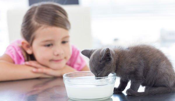 Hund oder katze haustier für kinder