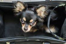 Hunde im Taschenformat sind klein aber oho!