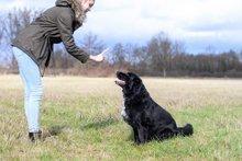 So klappt die Hundeerziehung