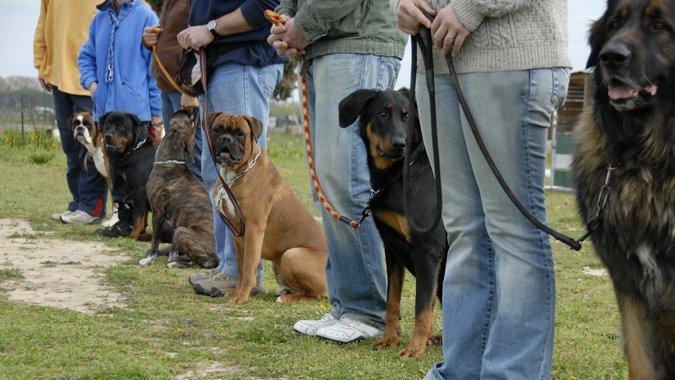 Obligatorischer Hundekurs: Was gilt?