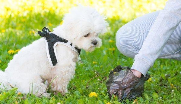 Was Tun Wenn Ihr Hund Durchfall Hat