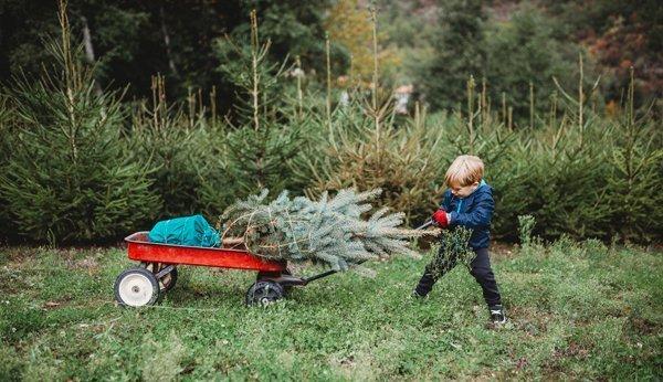 Tannenbaum selber schneiden zurich