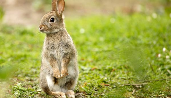 So Bauen Sie Einen Kaninchenstall Selber