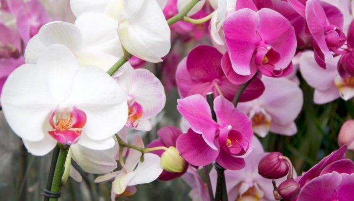 bild 6 blumen zum muttertag orchidee. Black Bedroom Furniture Sets. Home Design Ideas