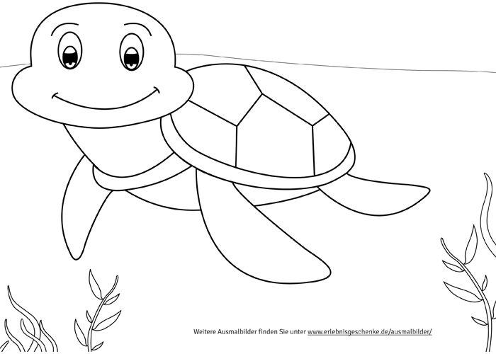 bild 7  malvorlage schildkröte