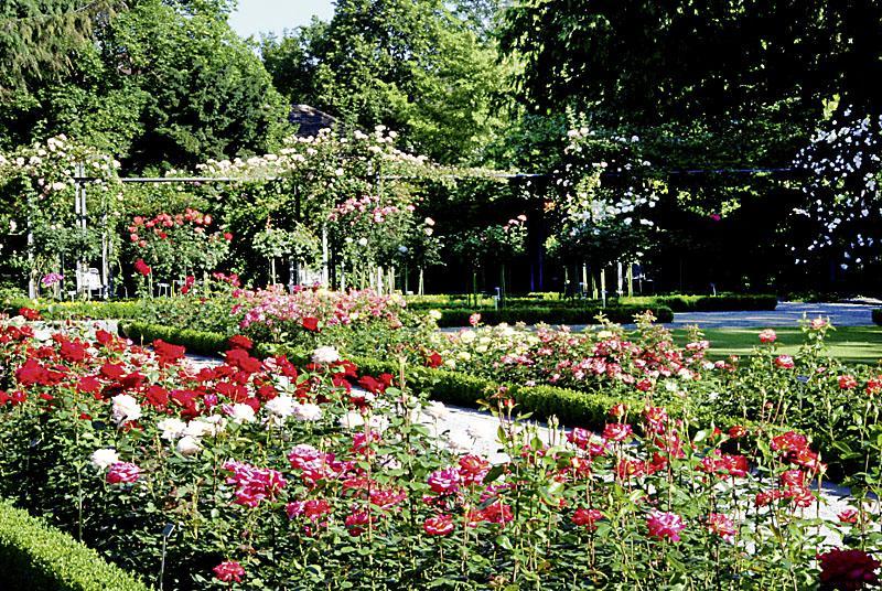 Kết quả hình ảnh cho Rosengarten Park