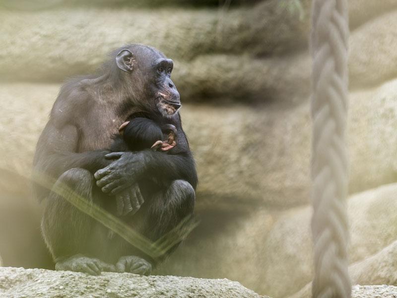 Zoo Basel - Familienleben.ch