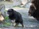 Moschusochse Foto: Tierpark Bern RANDO