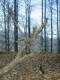 Walderlebnispfad Olten