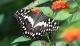 Foto: Papiliorama