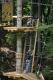 Waldseilpark Wasserfallen