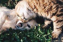 So finden Sie ein Haustier in Schweizer Tierheimen