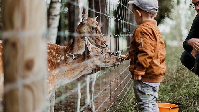 6 Wildparks, die zu einem Sonntagsspaziergang einladen